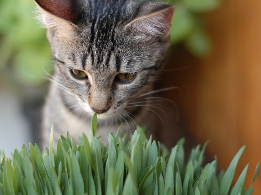 Health problems that could arise in your cat