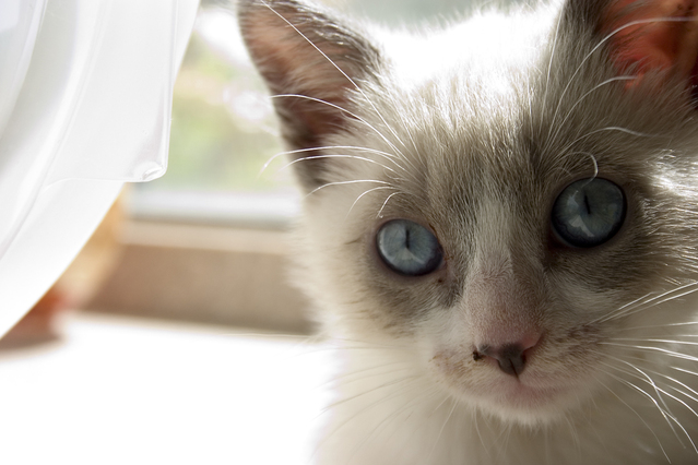 Helpful training tips for your cat or kitten