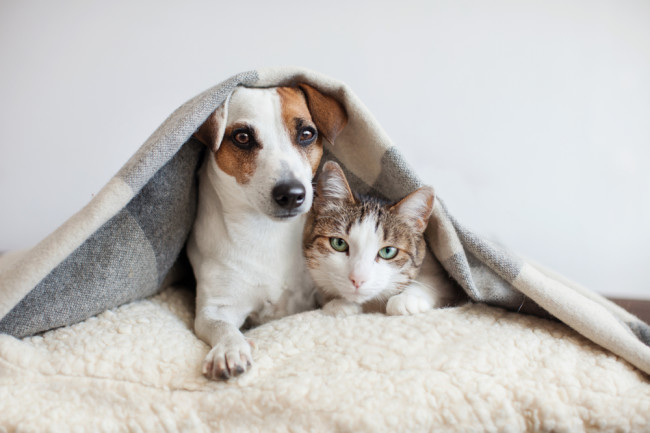Protect Your Pets From Toxins