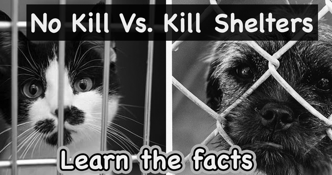 NO-KILL SHELTERS: LEARN THE FACTS AND BETTER ALTERNATIVES