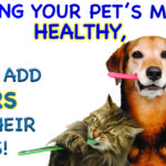 KEEPING YOUR PET'S MOUTH HEALTHY