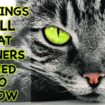 7 THINGS ALL CAT OWNERS NEED TO KNOW