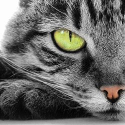 7 Things All Cat Owner's Need To Know