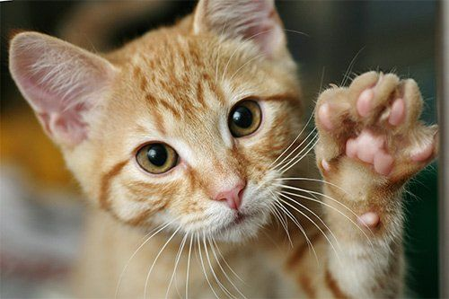 Thinking About Declawing? Think again!