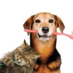 Oral Care – Vital to your pet's health