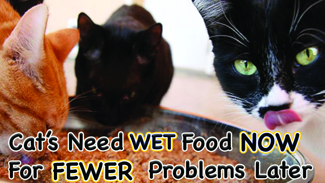 CATS NEED WET FOOD NOW FOR FEWER PROBLEMS LATER!